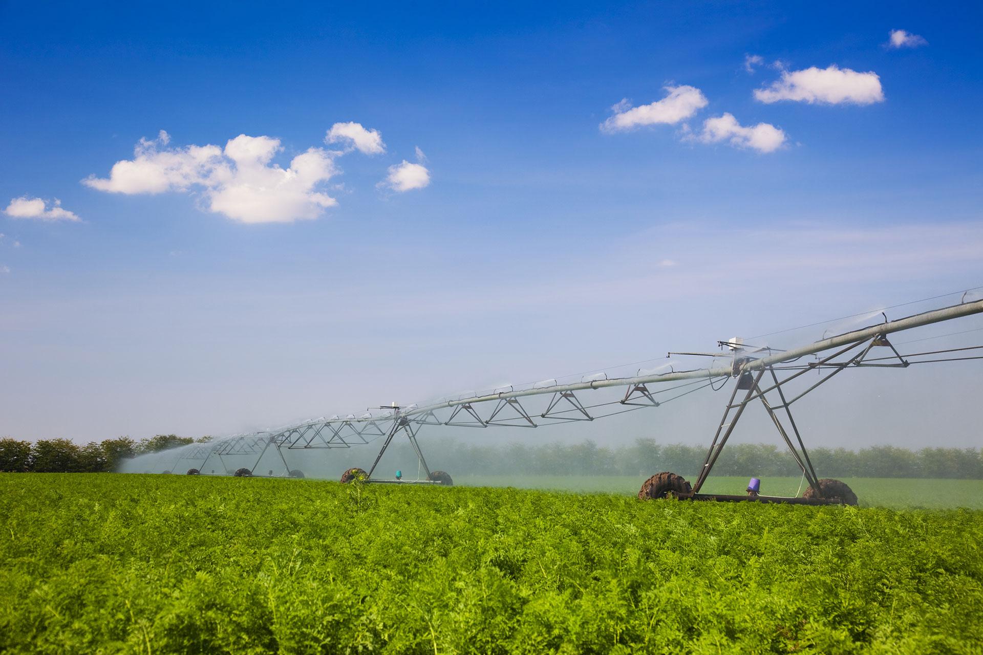 Produção primária e Indústria agroalimentar
